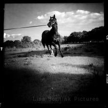 Horse on Lunge