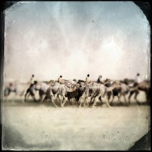 Camel Racing Herd, Caravan or Train