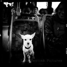 Dog on Bus, London